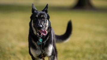 Pierwszy adoptowany pies wprowadził się do Białego Domu