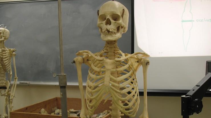 Odkryto najstarsze szczątki człowieka w Polsce. Mają ponad 100 tys. lat