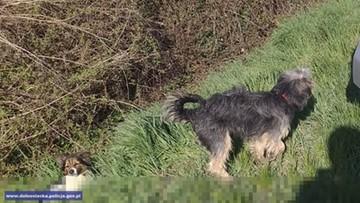 Pies pilnował przy drodze innego, rannego psa, którego prawdopodobnie potrąciło auto
