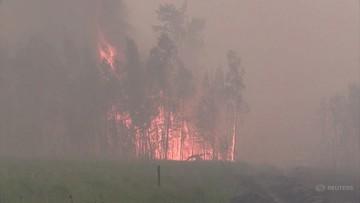 Płoną lasy. Wyemitowały tyle szkodliwych gazów, co Wenezuela w rok