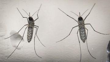 WHO: będzie wzrost zakażeń wirusem Zika. Głównie w Europie