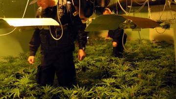 Warszawska policja przejęła 900 krzewów konopi i ponad 20 kg marihuany