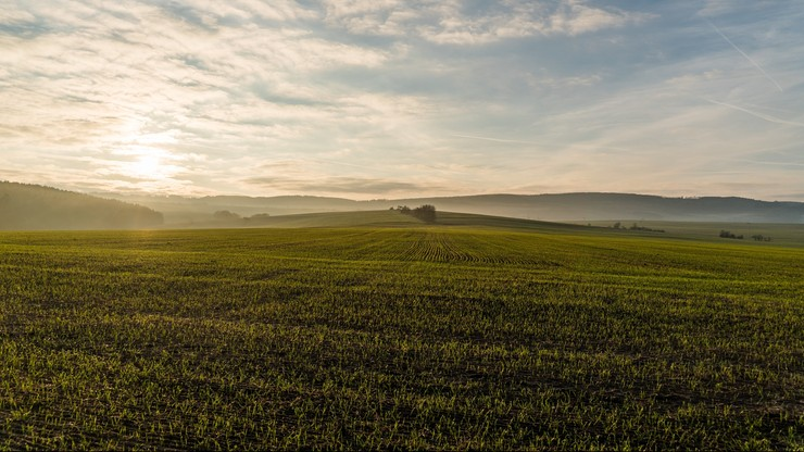 Rekordowe zbiory zbóż w 2020 roku