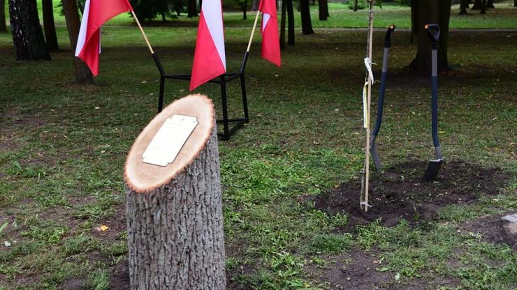 Tabliczka z okazji Święta Lasu - na ściętym drzewie. Internauci kpią z resortu środowiska