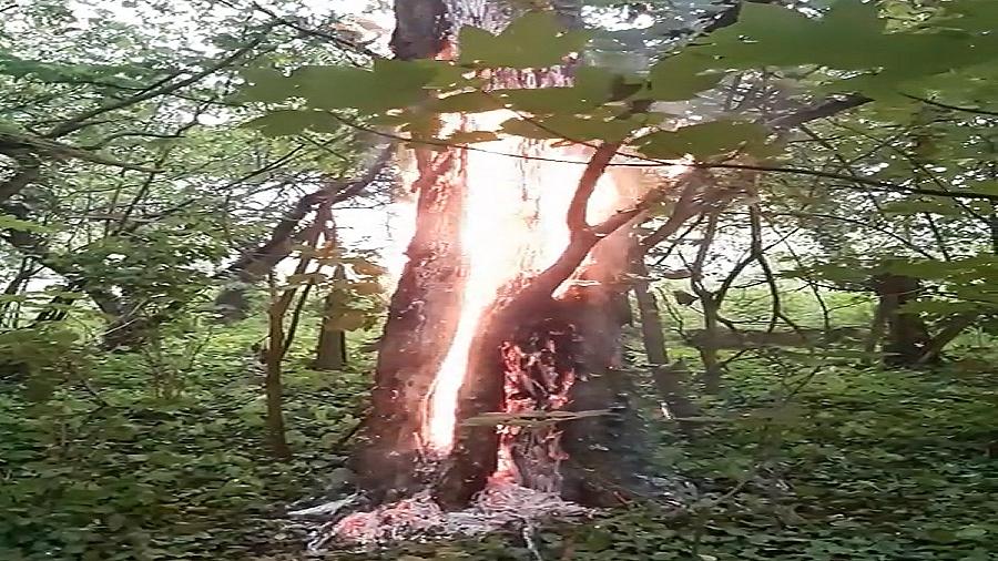 Pożar akacji od uderzenia pioruna w Cybince w woj. lubuskim. Fot. Facebook / Ochotnicza Straż Pożarna w Cybince.