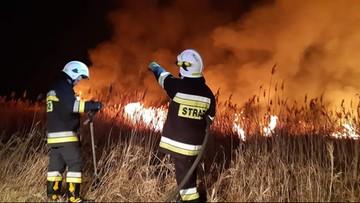 Strażacy walczą z koronawirusem, a podpalacze dodają im pracy. Spłonęło 90 hektarów rezerwatu