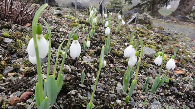 Rozpoczęła się astronomiczna wiosna