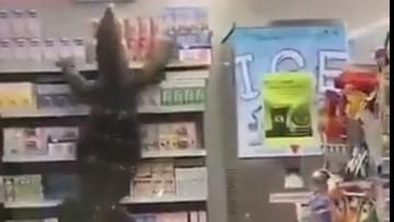 Gigantyczna jaszczurka wdarła się do sklepu. Zrzucała z regału kartony z mlekiem