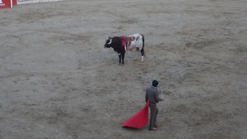 Co najmniej 120 byków uniknęło śmierci. Przewrotny skutek pandemii