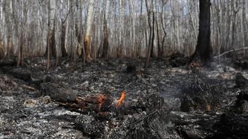 Ponad 125 tys. zł za wskazanie sprawcy pożaru Biebrzańskiego Parku Narodowego