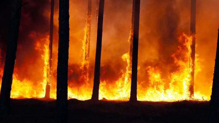 Podpalali lasy. Stracono 24 osoby