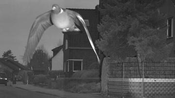 """Gołąb """"przekroczył dozwoloną prędkość"""". Fotoradar zrobił mu zdjęcie"""