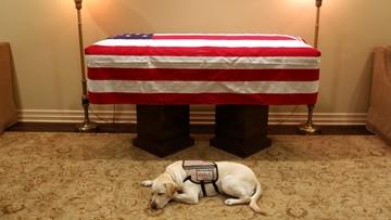 Pies prezydenta H.W. Busha czuwał przy jego trumnie. Zdjęcie poruszyło internautów