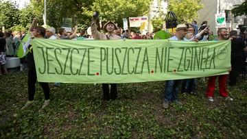 Wycinka w Puszczy Białowieskiej musi zostać wstrzymana. Decyzja UNESCO