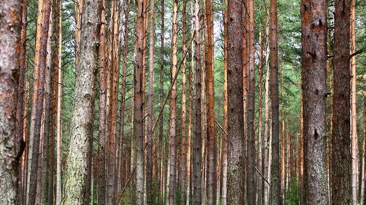 Zwłoki wisiały na drzewie 13 lat. Gniazdowały w nich pszczoły, osy i wiewiórka