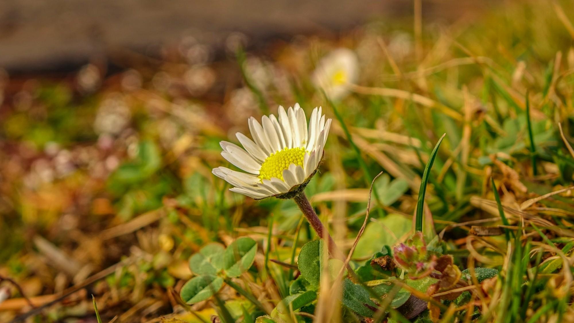 Wiosenna pobudka - zdjęcie 2