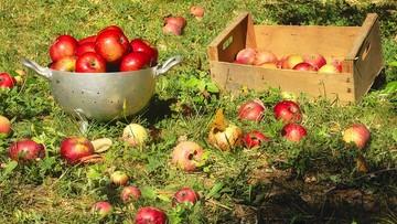 Rekordowe zbiory jabłek w 2016 r. Cieszyli się tylko konsumenci