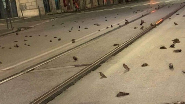 """Setki martwych ptaków na rzymskich ulicach. """"Wojna noworoczna"""""""