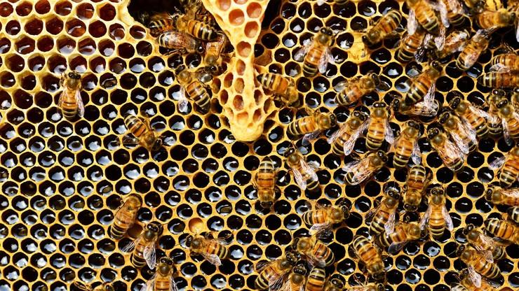Zajezierze. Setki pszczół zginęły, bo ktoś zalał je ropą. Policja szuka sprawcy