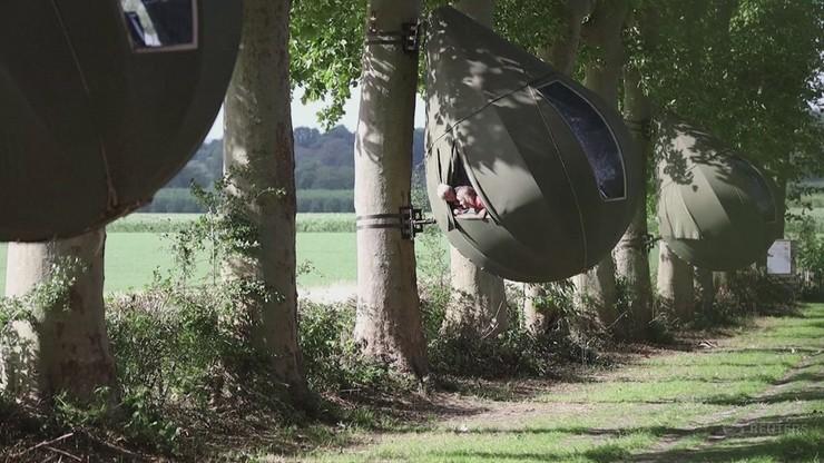 Belgijski sposób na wakacje. Noclegi w namiotach... na drzewie