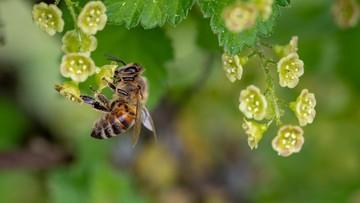 Użył zakazanego środka, zginęło 7,5 mln pszczół. Grozi mu więzienie