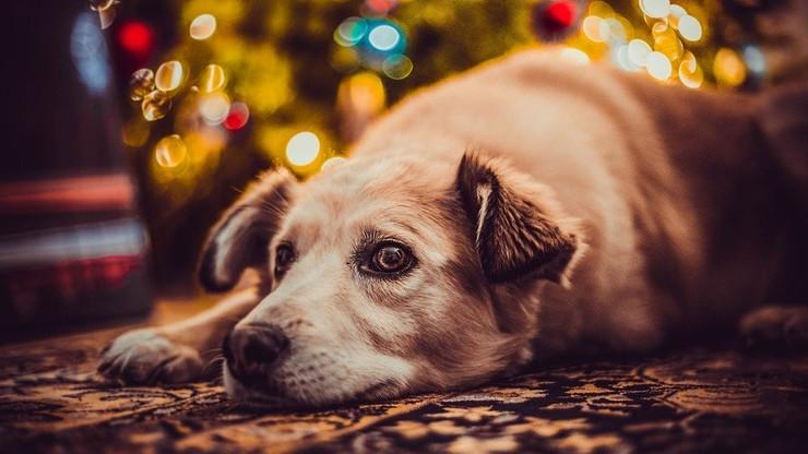 Pies pojawi się na mszy w Olsztynie. Ksiądz zachęca do adopcji