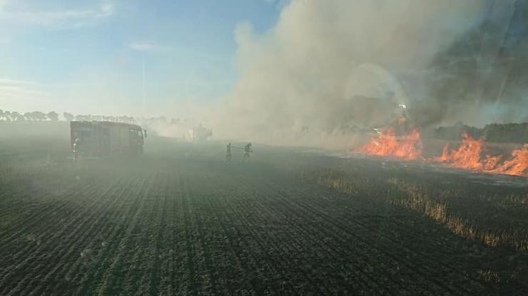 Płoną zboża i ścierniska. Zaczęły się niebezpieczne pożary pól uprawnych