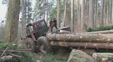 Leśnicy chcą wycinać świerki w Puszczy Białowieskiej. Ekolodzy: to koniec ochrony
