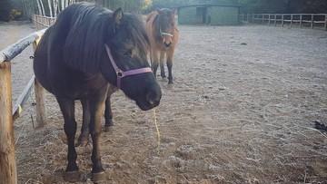 Konie pomagały niepełnosprawnym dzieciom. Ktoś otruł zwierzęta