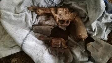 Remontował dom, pod podłogą znalazł zabytkowe rewolwery