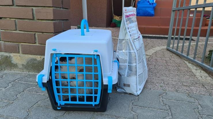 Poznań. Porzucił kota przed domem. Wrócił... ukraść pelargonie