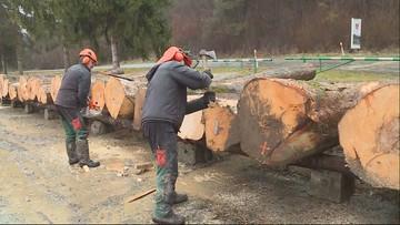 Sprzedaż luksusowego drewna z Lasów Państwowych. Trafi m.in. do ekskluzywnych samochodów