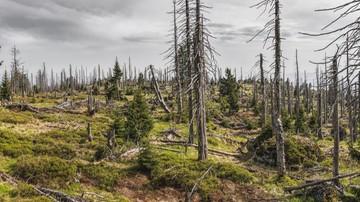 Niemieckie media: nasze lasy są w fatalnym stanie