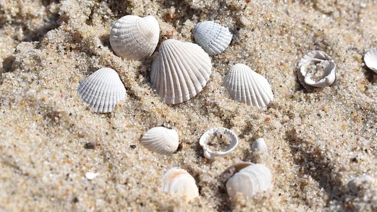"""Służby na Sardynii walczą z okradaniem plaż przez turystów. Zarekwirowano 280 kilogramów """"łupów"""""""