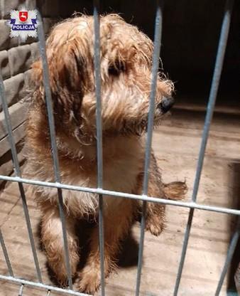 Bity pies trafił do weterynarza, a później do właścicielki
