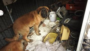 """Policja w chińskim barze w Wólce Kosowskiej. Martwy pies na zapleczu, """"mięso zwisające z dachu"""""""
