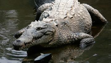 Krokodyle znalazły schronienie w... kanałach chłodniczych elektrowni atomowej