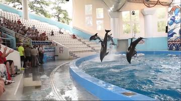 Foki grały w piłkę z delfinami. Lewandowski i Glik przecierali oczy ze zdumienia [WIDEO]