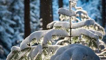 Noc będzie mroźna. We wtorek opady śniegu i marznącego deszczu