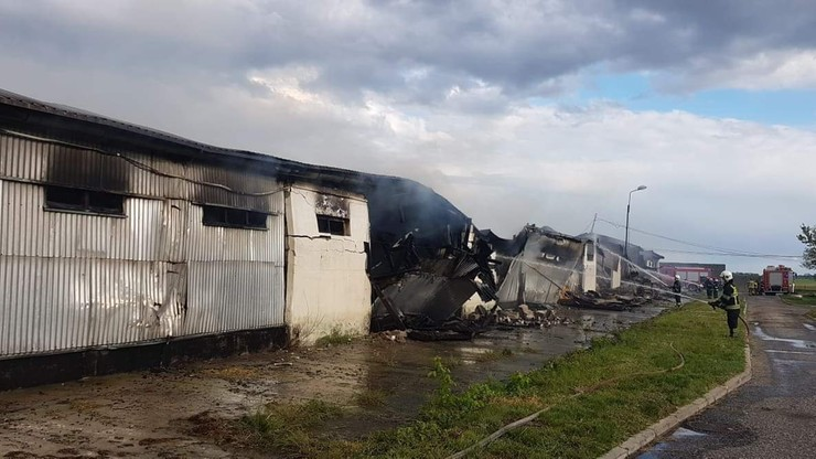 Pożar chlewni pod Poznaniem. 2 tys. świń zginęło po tym, jak zawalił się na nie płonący dach
