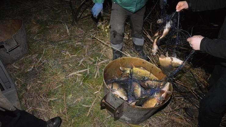 Złowili nielegalnie blisko 200 kg karpi. Kłusownicy złapani na gorącym uczynku
