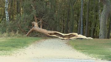 Silny wiatr na północy kraju. Powalone drzewa, przerwy w dostawie prądu