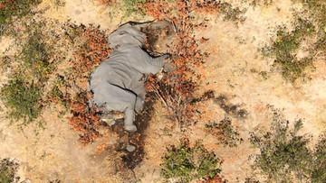 Śmierć setek słoni w Botswanie. Drastyczne zdjęcia