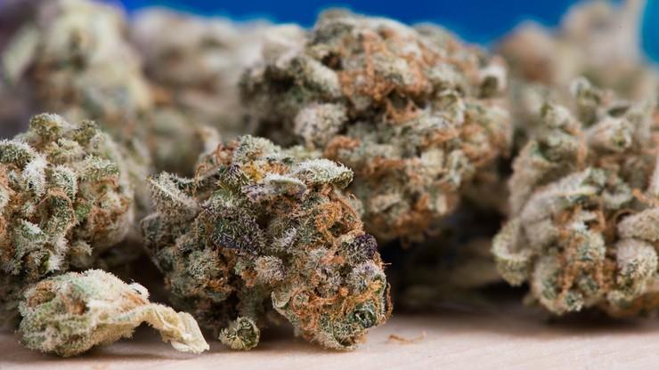 """""""Marihuanowa apokalipsa"""" w Kalifornii. Klienci skorzystali na ogromnej wyprzedaży narkotyków"""