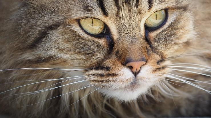 Kot przemytnik schwytany na Kostaryce