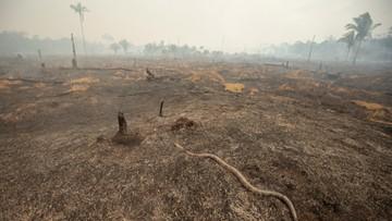 Władze Brazylii przyjmą zagraniczną pomoc w walce z pożarami Amazonii