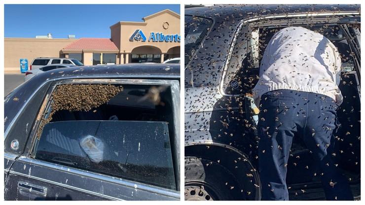 Zostawił otwarte okno w samochodzie. Kilkanaście tysięcy pszczół wleciało do środka