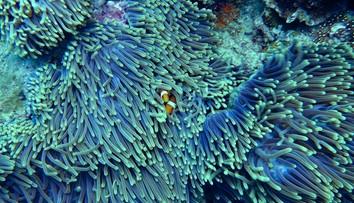 Nieodwracalne zniszczenia Wielkiej Rafy Koralowej. Naukowcy alarmują