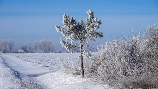 02-03-2021 11:00 Od czwartku wraca zima. Spadnie nawet 10 cm śniegu, a temperatura sięgnie minus 15 stopni