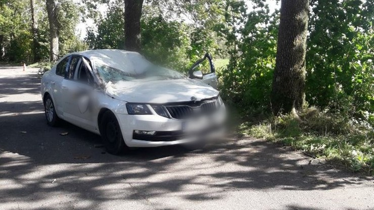 Warmińsko-mazurskie. Drzewo spadło na auto. W wypadku w miejscowości Lutry zginął 59-letni mężczyzna